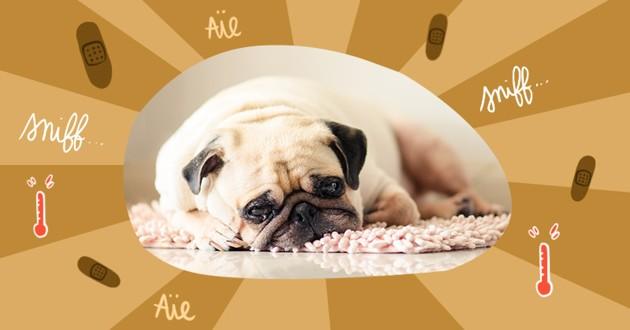 Visuel avec un chien couché au regard triste, logo aïe