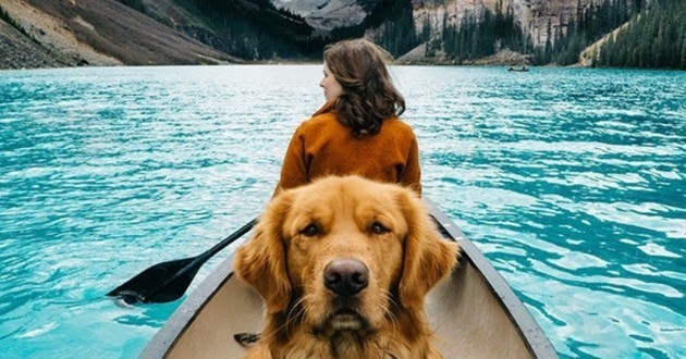 Golden Retriever voyage Aspen