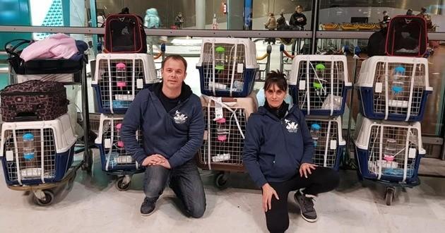 L'association Stéphane Lamart sauve des chiens de Chine