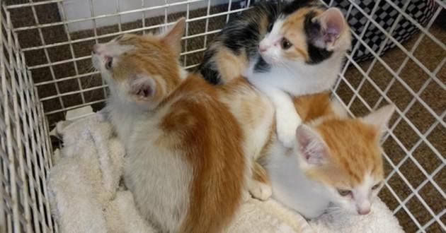 chatons roux et blanc