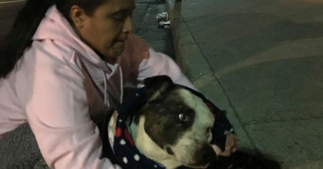 Blessé à l'oreille, ce chien a eu beaucoup de chance de croiser la route de ces 3 femmes