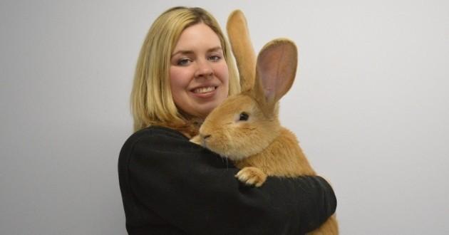 Abandonné à cause de sa taille de géant, Atlas le lapin cherche une nouvelle famille