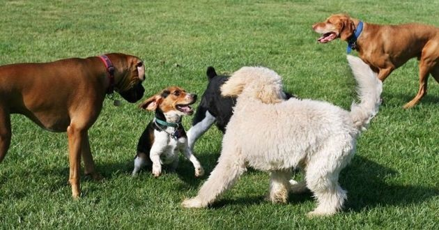 chiens au parc canin