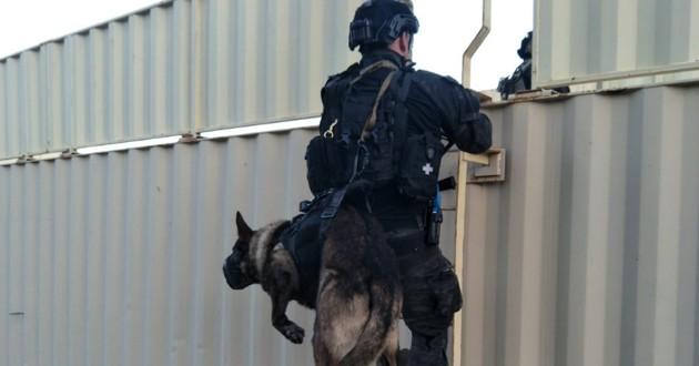 Un policier australien avec son chien-loup