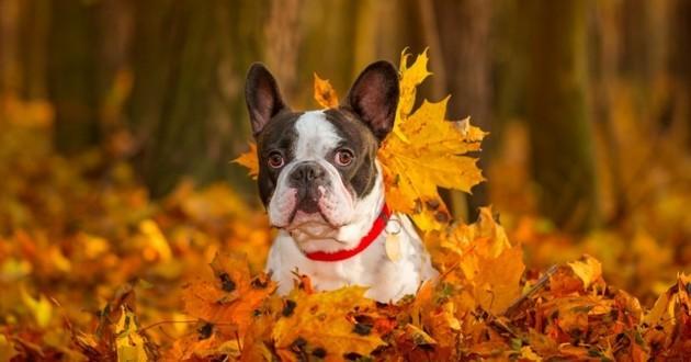 chien feuilles d'automne
