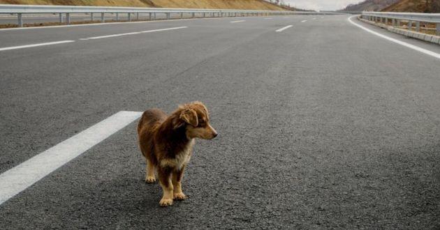 chien sur l'autoroute