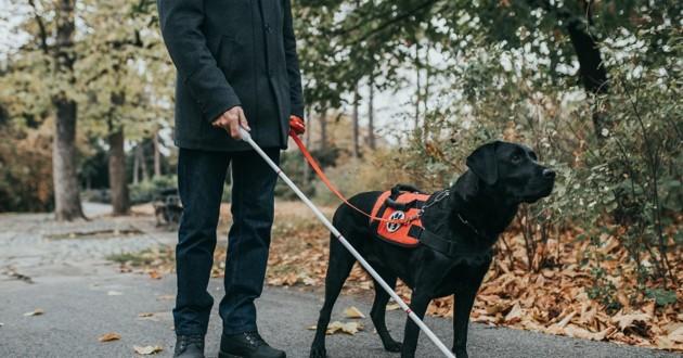 Metz : exclu d'un restaurant car il avait un chien-guide