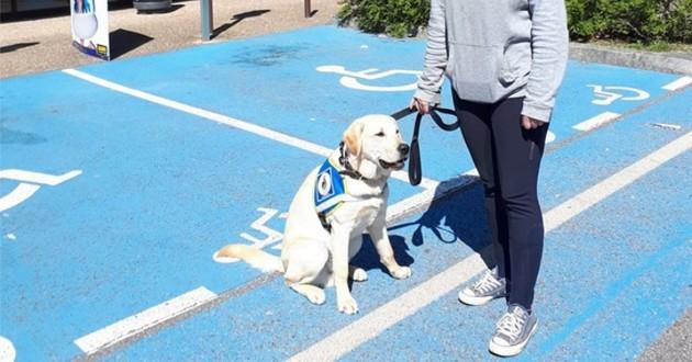 Le chien Oslo devant le magasin Babou