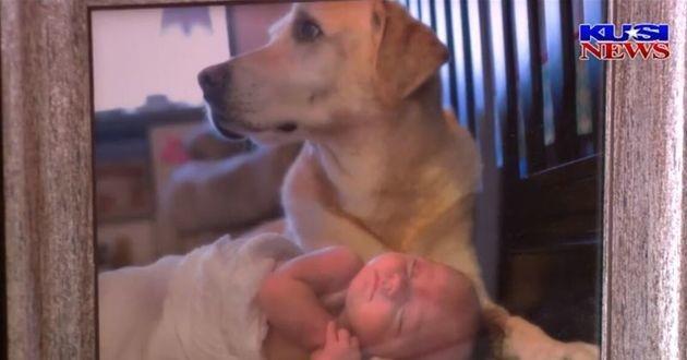 bébé et labrador blanc