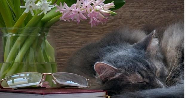 chat détendu fleur de bach