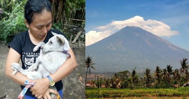 bali volcan sauvetage animaux