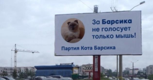 Barsik le chat maire et bientôt président