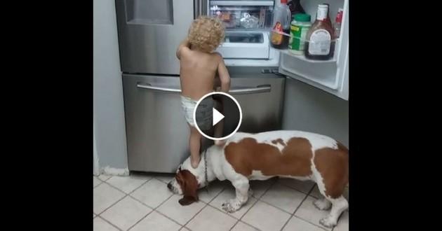 enfant sur le dos chien Beagle réfrigérateur
