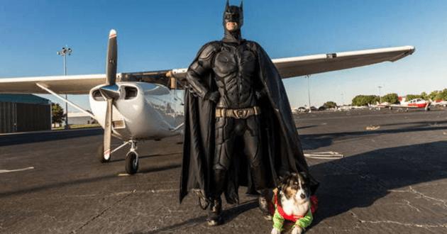 Batman des animaux