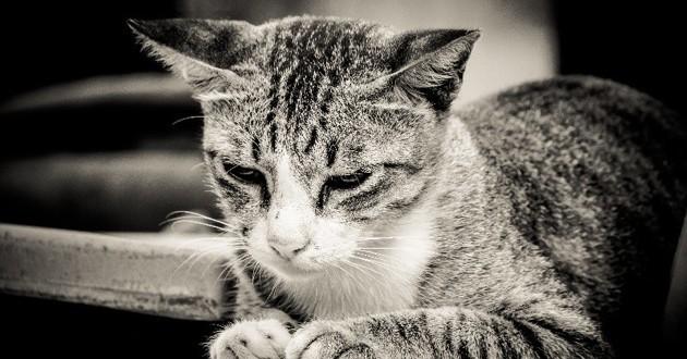 chat congelé bayonne