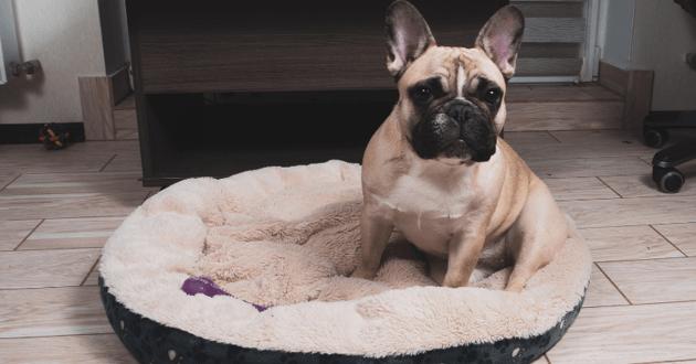 Chien couché dans son panier avec un jouet