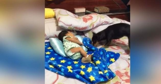 bébé et chien sur un lit