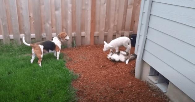 chien, chat et chèvre