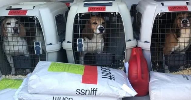 Beagles arrivés au refuge SPA de Montpellier