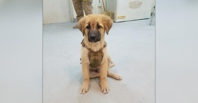 Bear le chien errant en Afghanistan