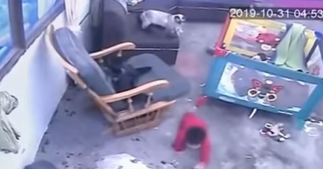bébé qui rampe et chat