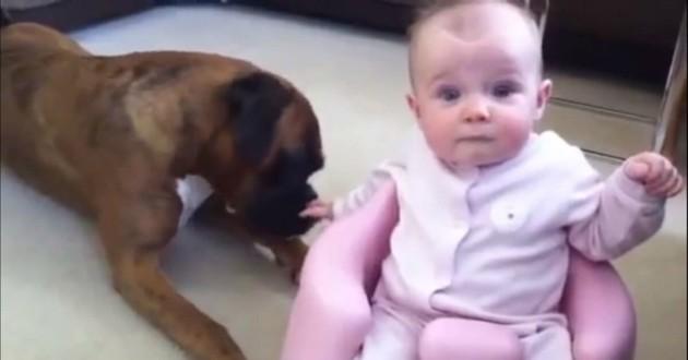 bébé à côté d'un Boxer