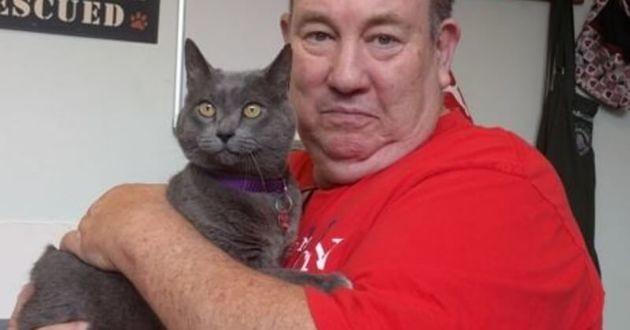 chat perdu retrouvé 11 ans