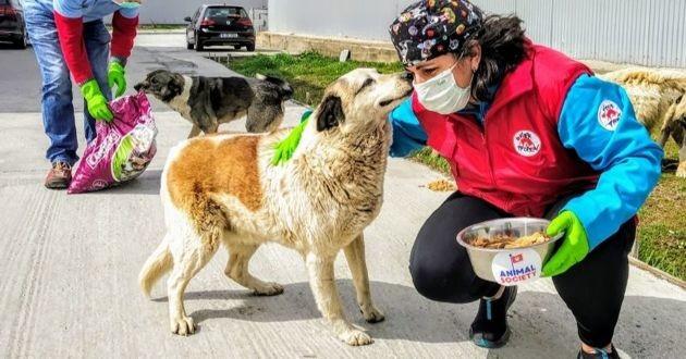un chien errant et un bénévole