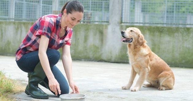 une bénévole qui nourrit un chien de refuge
