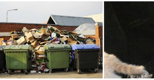 ratons laveurs poubelle