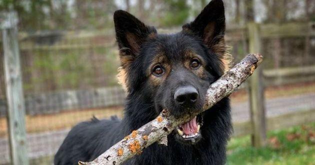chien avec un bâton