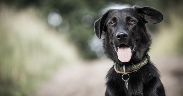 chien de berger noir abandonné