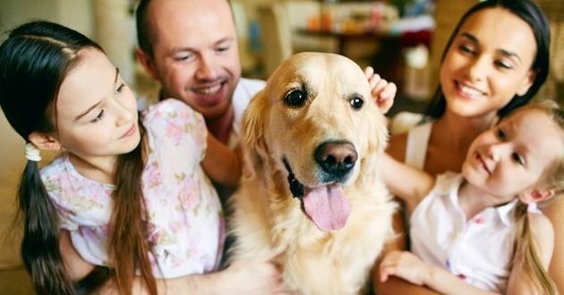 Purina® In Society : quand la marque s'engage pour le bien-être des animaux