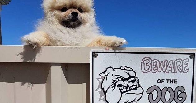 Attention chien dangereux ! Découvrez ces panneaux qui nous mentent