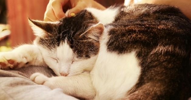 Les bienfaits du ronronnement des chats