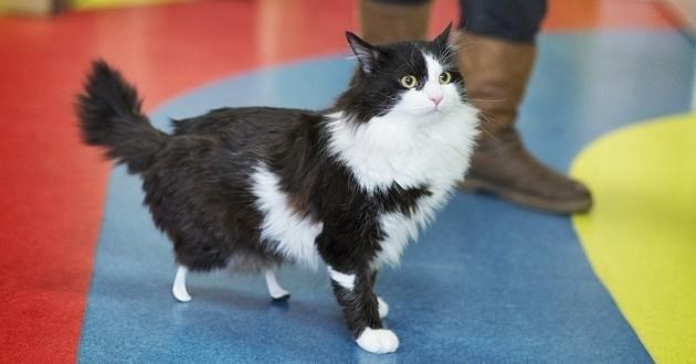 Pooh le chat bionique