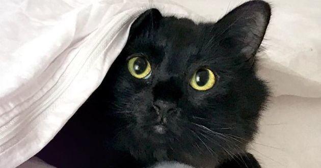 chat noir sous un drap blanc