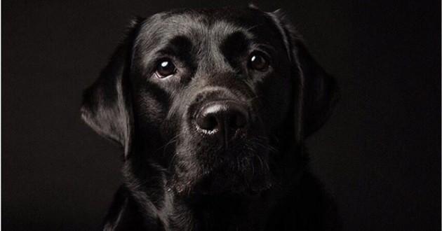 chien noir sur fond noir