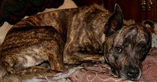 cancer chien tumeur