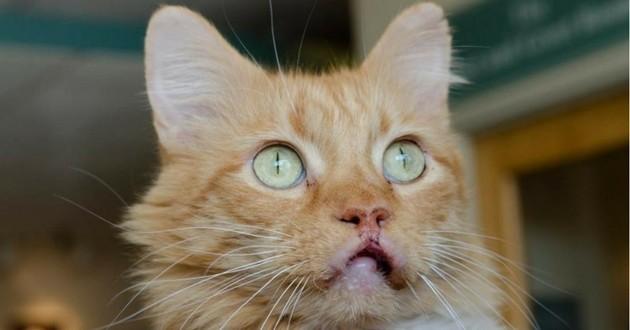 chat grosses lèvres