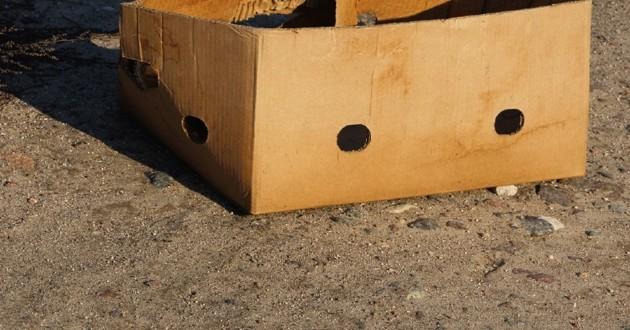 chiots abandonnés dans une boîte