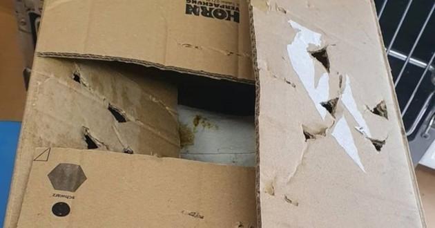 boite en carton abandonné