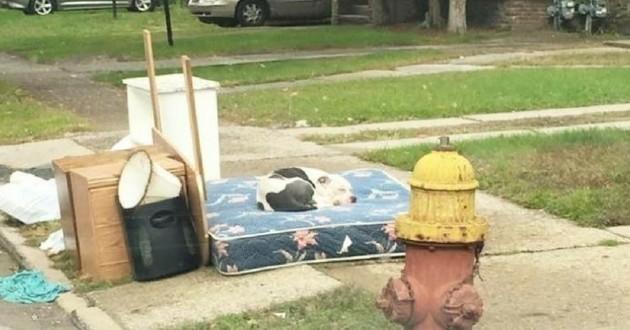 Boo chien abandonné meubles