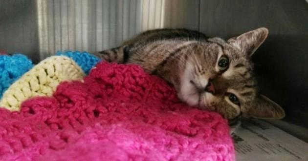 chat disparu retrouvé californie