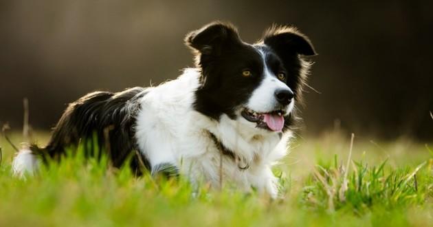 sauvetage chien montagne