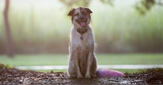 chien assis dans la boue