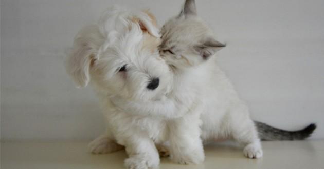 Un calin entre chien et chat