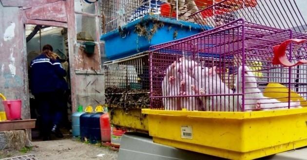 sauvetage animaux bretagne