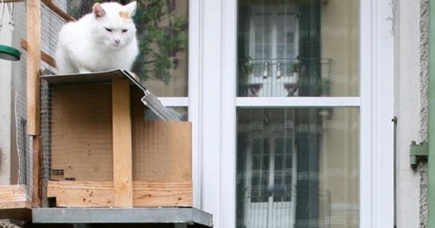 échelles pour chats