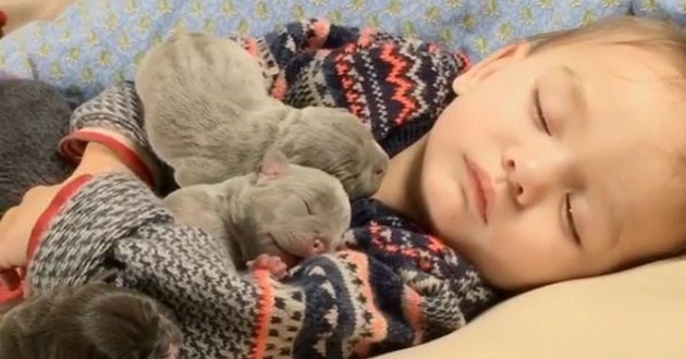 Ces chiots bouledogues et cet enfant passent toutes leurs siestes ensemble... Adorable !
